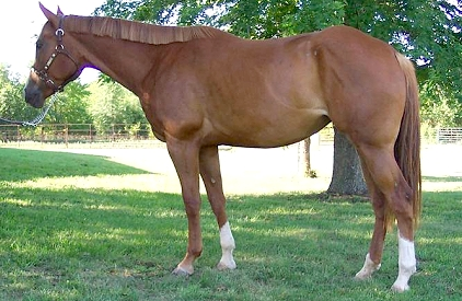KGJ Quarterhorses Horses For Sale